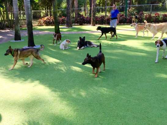 Artificial Grass Photos: Grass Turf Cabin John, Maryland Pet Turf,  Dog Kennels