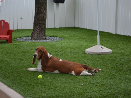 Artificial Grass Photos: Outdoor Carpet New Market, Maryland Dog Pound, Dogs