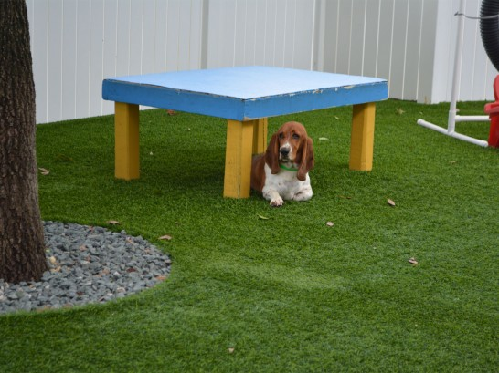 Synthetic Lawn Mellwood, Maryland Dog Hospital, Dogs Park artificial grass